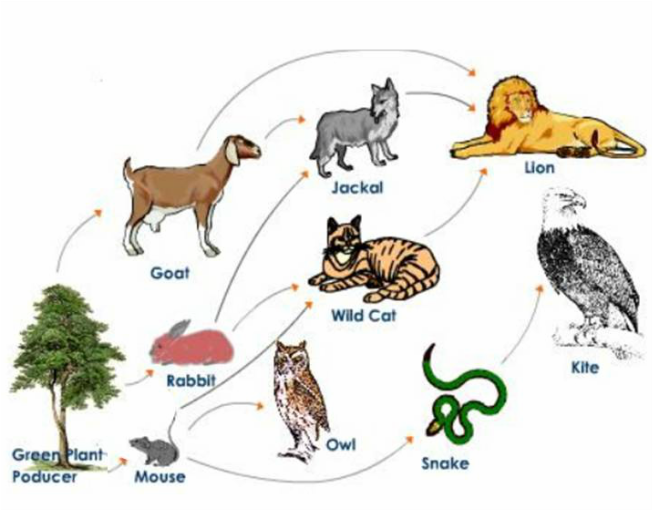 Food Webs For Feral Cats